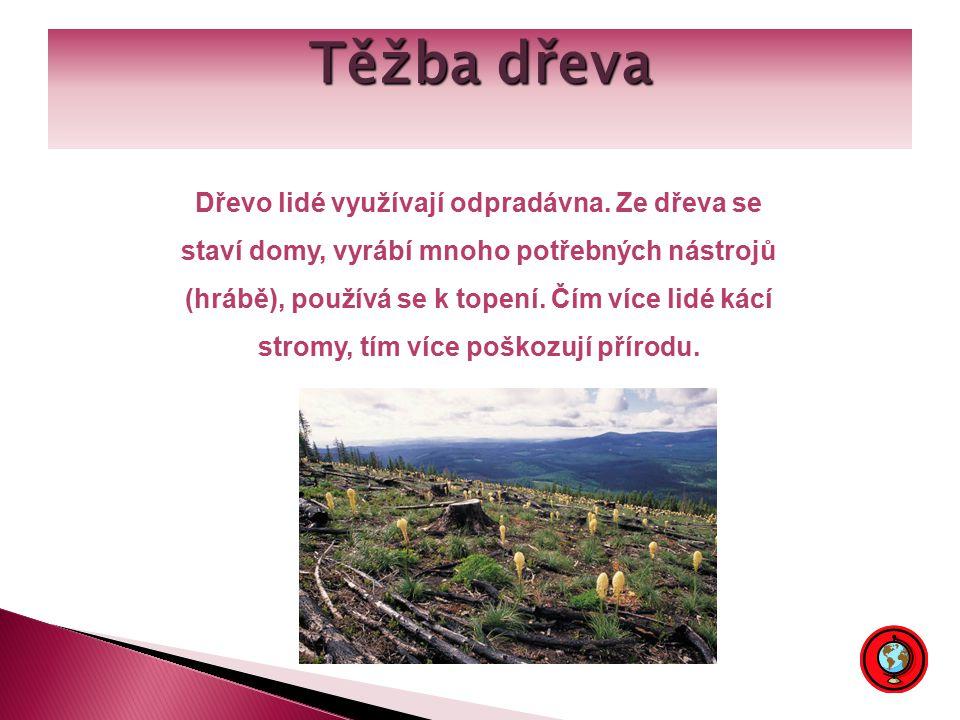 Těžba dřeva Dřevo lidé využívají odpradávna.