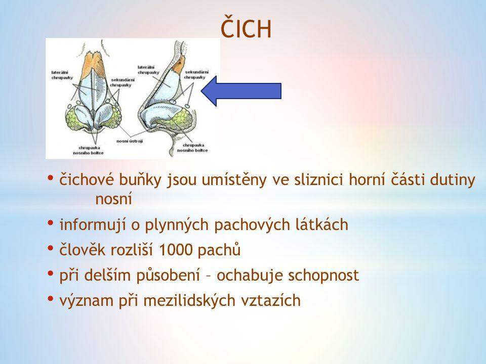 ČICH čichové buňky jsou umístěny ve sliznici horní části dutiny nosní informují o plynných pachových látkách člověk rozliší 1000 pachů při delším půso