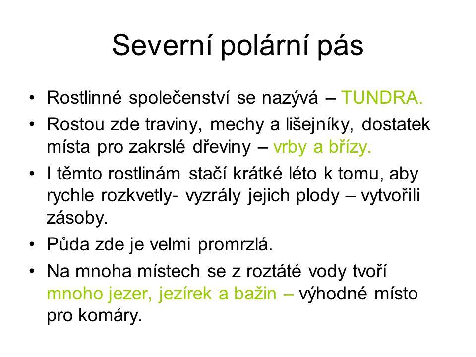 Nejotužilejší tvorové sobi lední medvědi vlci zajíci pižmoni lišky polární /www.ezoo.cz/