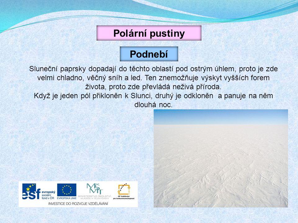 Polární pustiny Podnebí Sluneční paprsky dopadají do těchto oblastí pod ostrým úhlem, proto je zde velmi chladno, věčný sníh a led. Ten znemožňuje výs