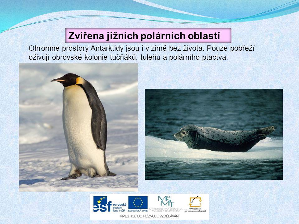 Zvířena jižních polárních oblastí Ohromné prostory Antarktidy jsou i v zimě bez života. Pouze pobřeží oživují obrovské kolonie tučňáků, tuleňů a polár