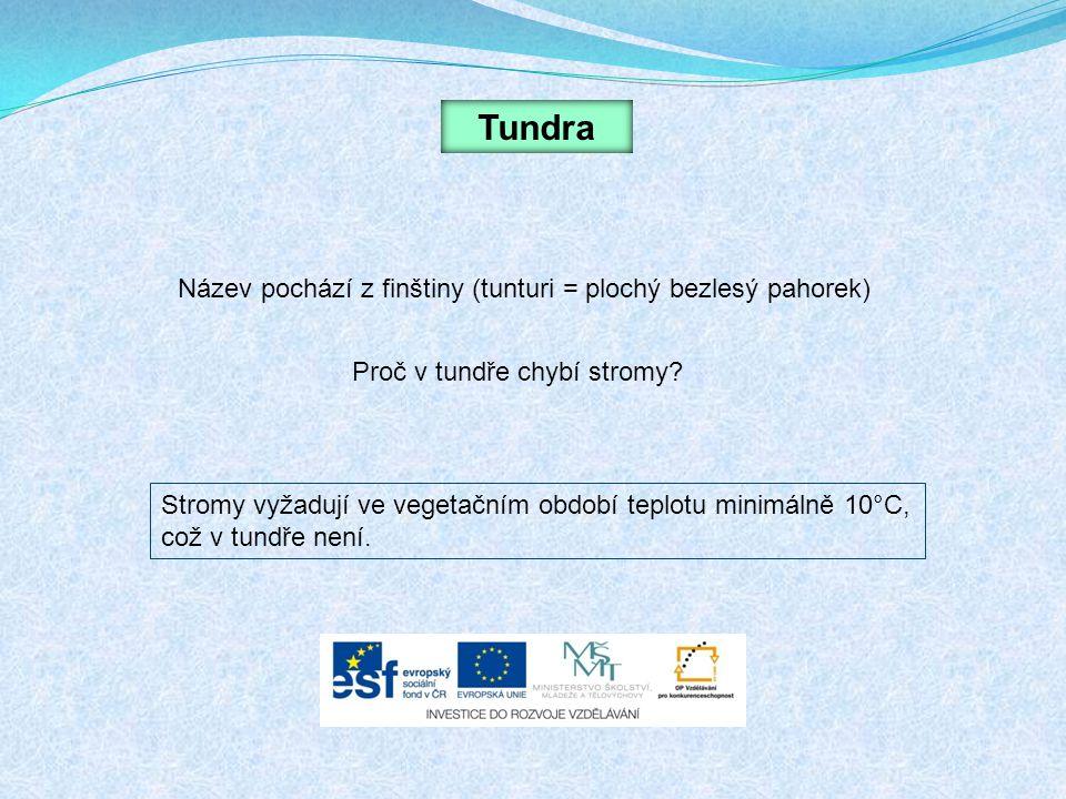 Tundra Název pochází z finštiny (tunturi = plochý bezlesý pahorek) Proč v tundře chybí stromy? Stromy vyžadují ve vegetačním období teplotu minimálně