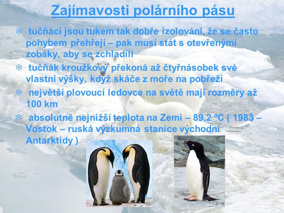 Zajímavosti polárního pásu  tučňáci jsou tukem tak dobře izolováni, že se často pohybem přehřejí – pak musí stát s otevřenými zobáky, aby se zchladili  tučňák kroužkový překoná až čtyřnásobek své vlastní výšky, když skáče z moře na pobřeží  největší plovoucí ledovce na světě mají rozměry až 100 km  absolutně nejnižší teplota na Zemi – 89,2 ºC ( 1983 – Vostok – ruská výzkumná stanice východní Antarktidy )