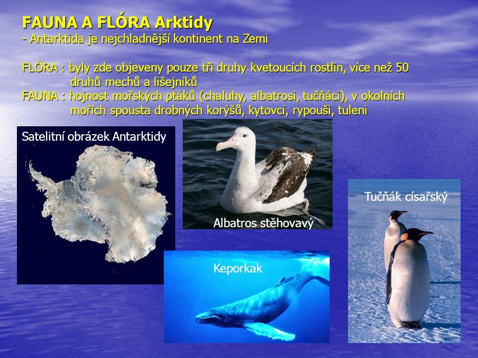 FAUNA A FLÓRA Arktidy - Antarktida je nejchladnější kontinent na Zemi FLÓRA : byly zde objeveny pouze tři druhy kvetoucích rostlin, více než 50 druhů