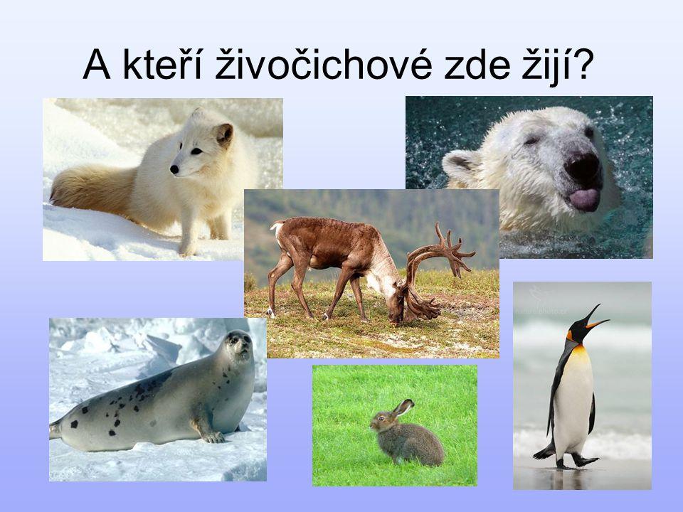 A kteří živočichové zde žijí?