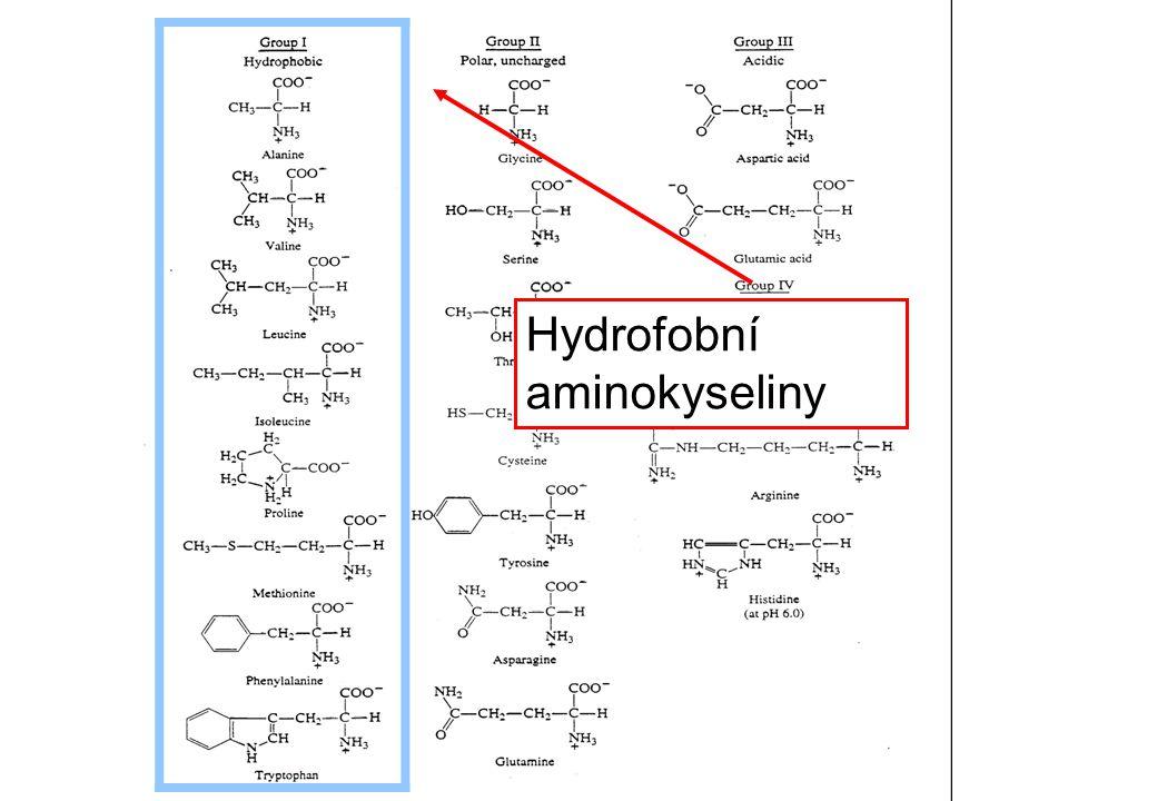 Hydrofobní aminokyseliny
