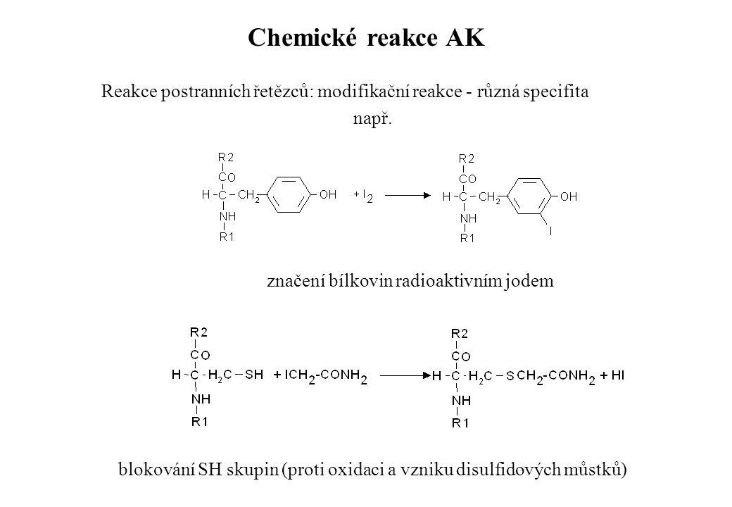 Reakce postranních řetězců: modifikační reakce - různá specifita např. značení bílkovin radioaktivním jodem blokování SH skupin (proti oxidaci a vznik