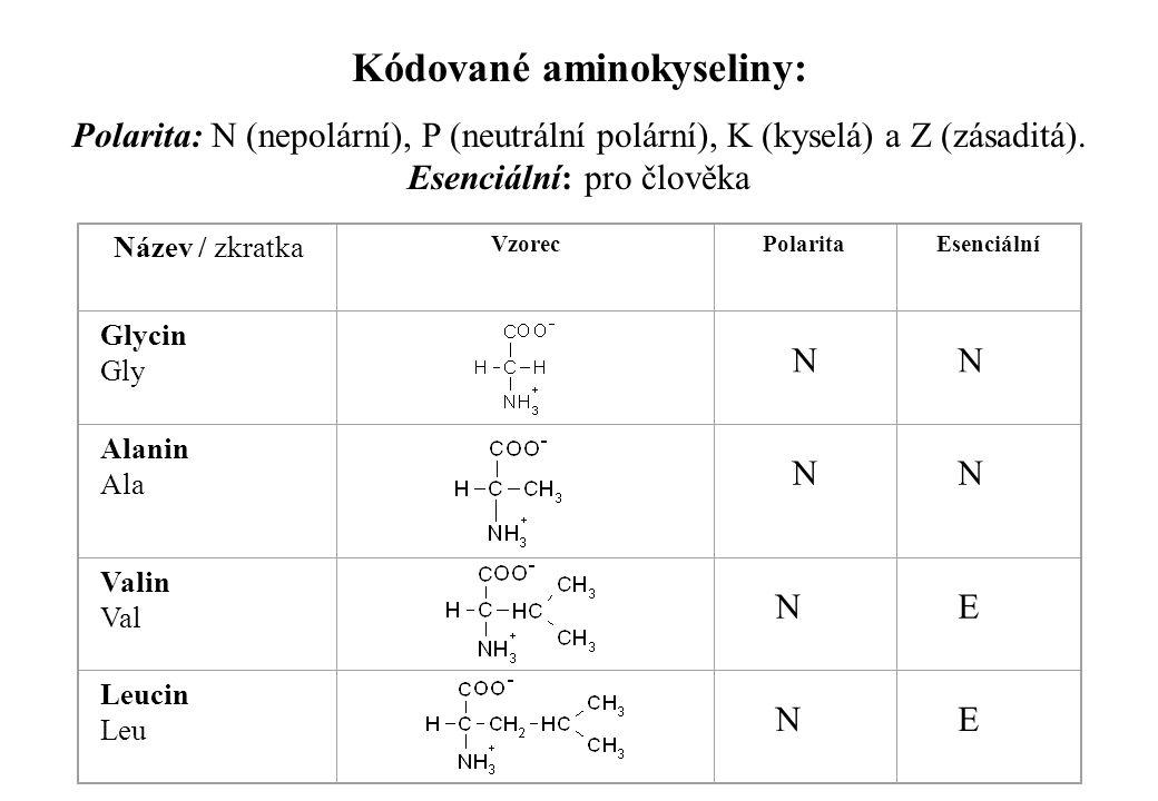 Kódované aminokyseliny: Polarita: N (nepolární), P (neutrální polární), K (kyselá) a Z (zásaditá). Esenciální: pro člověka Název / zkratka VzorecPolar