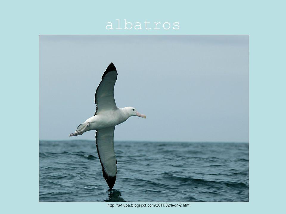 albatros http://a-tlupa.blogspot.com/2011/02/leon-2.html