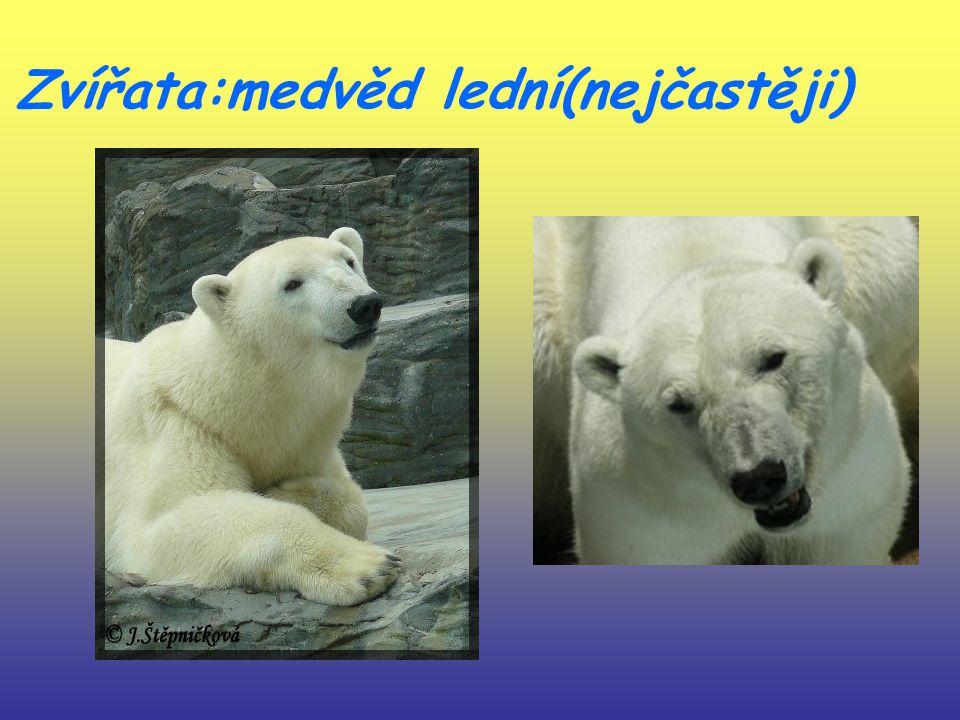 Zvířata:medvěd lední(nejčastěji)
