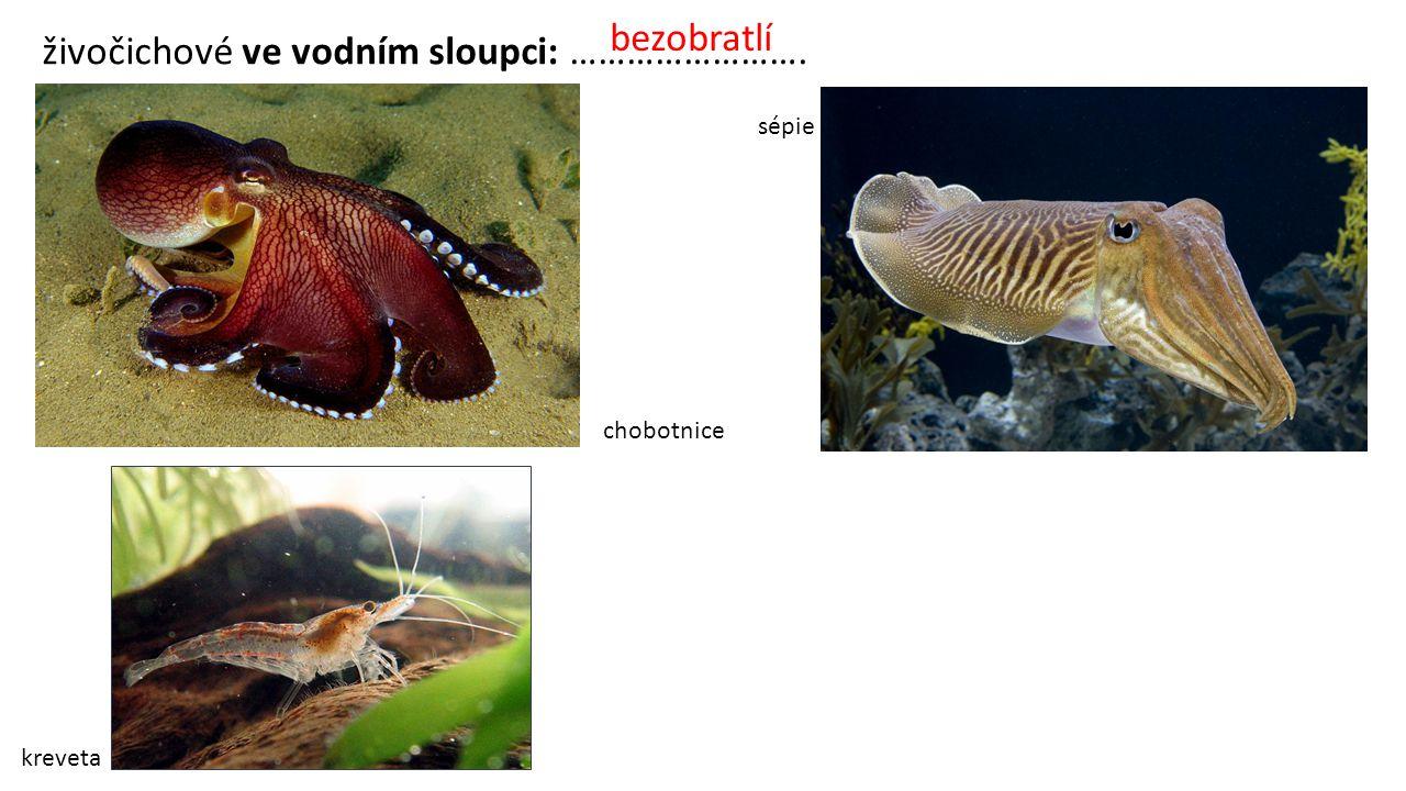 živočichové ve vodním sloupci: ……………………. kreveta chobotnice sépie bezobratlí
