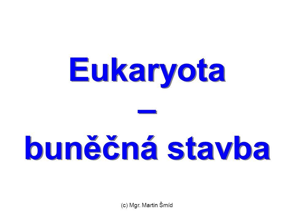 (c) Mgr. Martin Šmíd Eukaryota – buněčná stavba