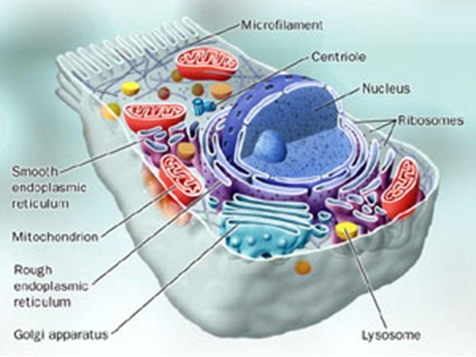 Receptory spojené s enzymy