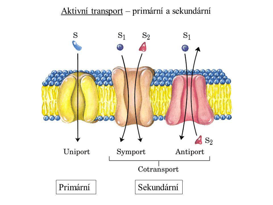 Aktivní transport – primární a sekundární PrimárníSekundární