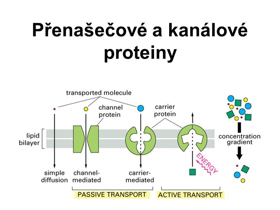 Přenašečové a kanálové proteiny