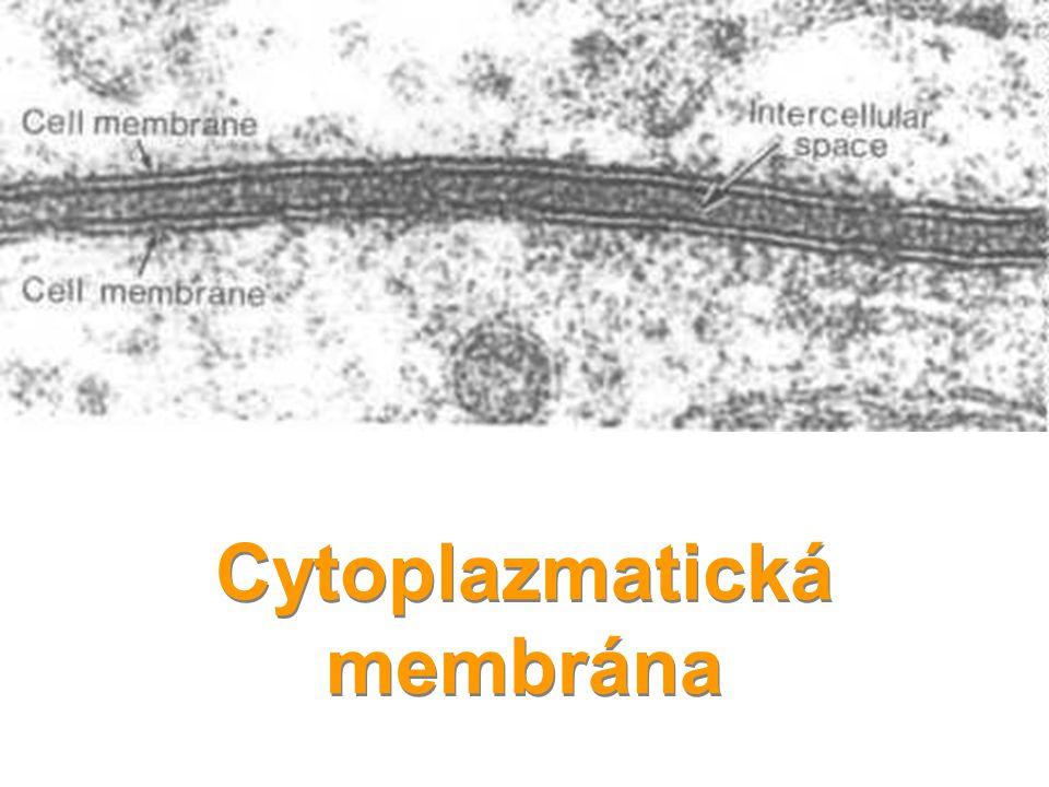 Jadérko - Nucleolus