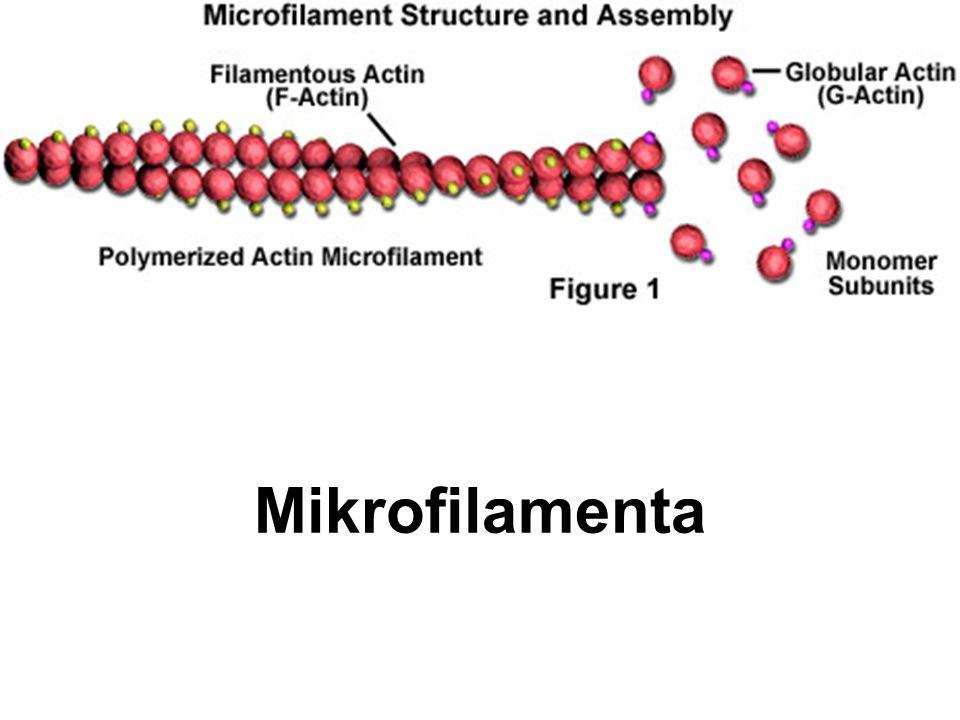 Mikrofilamenta
