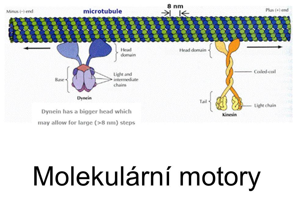 Molekulární motory