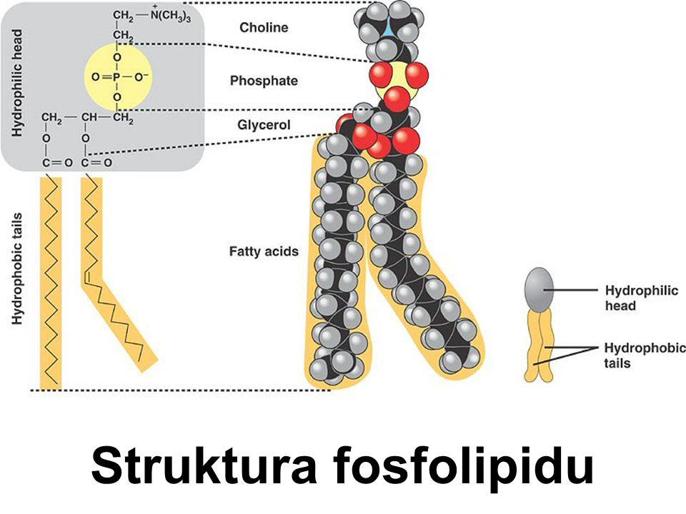 Vzájemné působení receptorů
