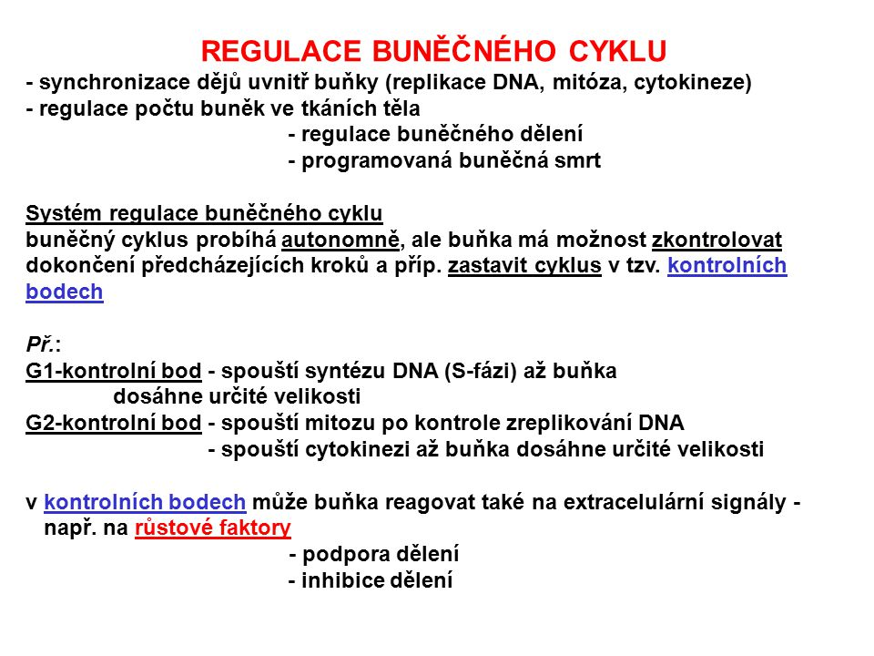 REGULACE BUNĚČNÉHO CYKLU - synchronizace dějů uvnitř buňky (replikace DNA, mitóza, cytokineze) - regulace počtu buněk ve tkáních těla - regulace buněč