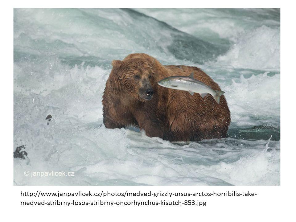 http://www.janpavlicek.cz/photos/medved-grizzly-ursus-arctos-horribilis-take- medved-stribrny-losos-stribrny-oncorhynchus-kisutch-853.jpg