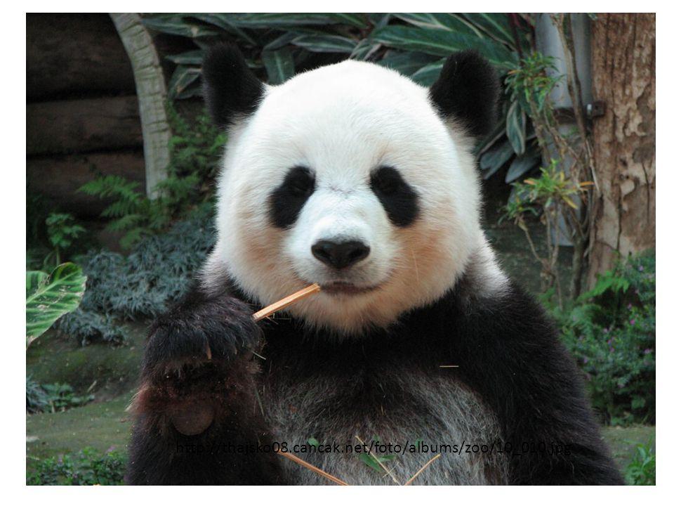 http://thajsko08.cancak.net/foto/albums/zoo/10_010.jpg