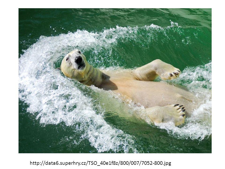 Medvěd hnědý: -Naše největší šelma, žije v Beskydech.