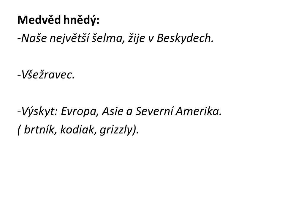 http://selmy.ursus.cz/medved/img/obecne/medved1.jpg