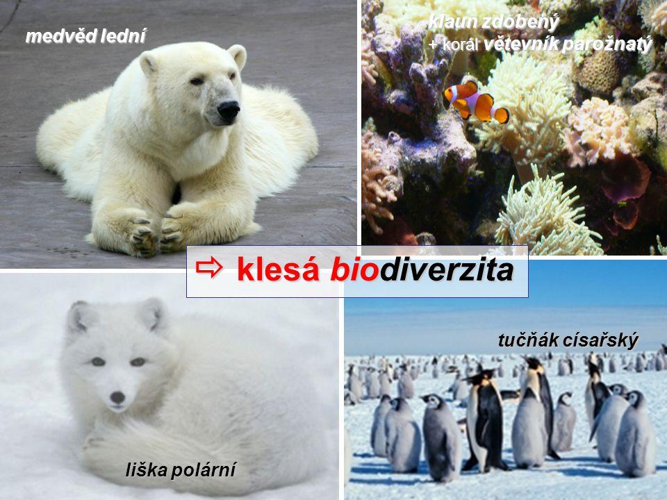 medvěd lední tučňák císařský liška polární  klesá biodiverzita klaun zdobený + korál větevník parožnatý