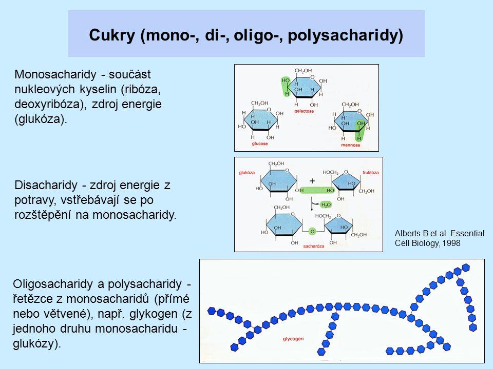 Cukry (mono-, di-, oligo-, polysacharidy) Monosacharidy - součást nukleových kyselin (ribóza, deoxyribóza), zdroj energie (glukóza). Disacharidy - zdr