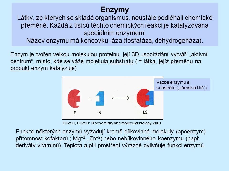 Enzymy Látky, ze kterých se skládá organismus, neustále podléhají chemické přeměně. Každá z tisíců těchto chemických reakcí je katalyzována speciálním