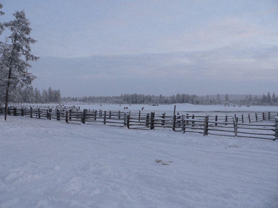 Zvířata jsou přizpůsobena podmínkám mrazivého místa. Koně jsou velmi robustní, s krátkýma nohama a hustou srstí. J s ou to polodivoká zvířata, ale vzá