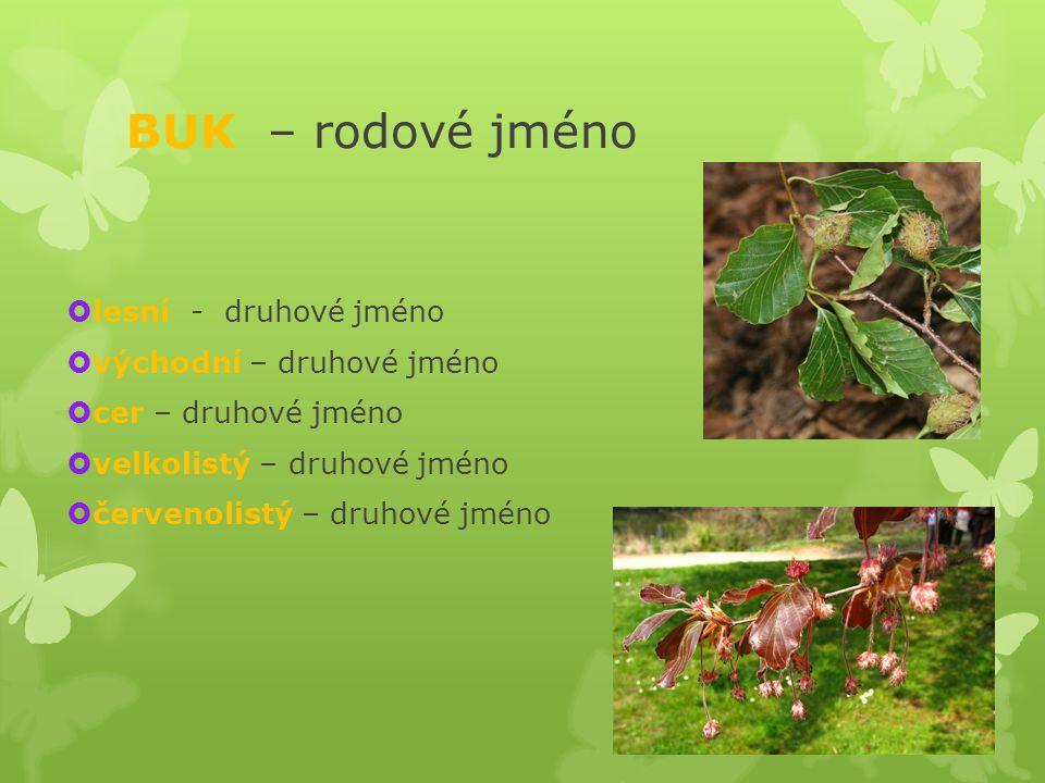 BUK – rodové jméno  lesní - druhové jméno  východní – druhové jméno  cer – druhové jméno  velkolistý – druhové jméno  červenolistý – druhové jméno