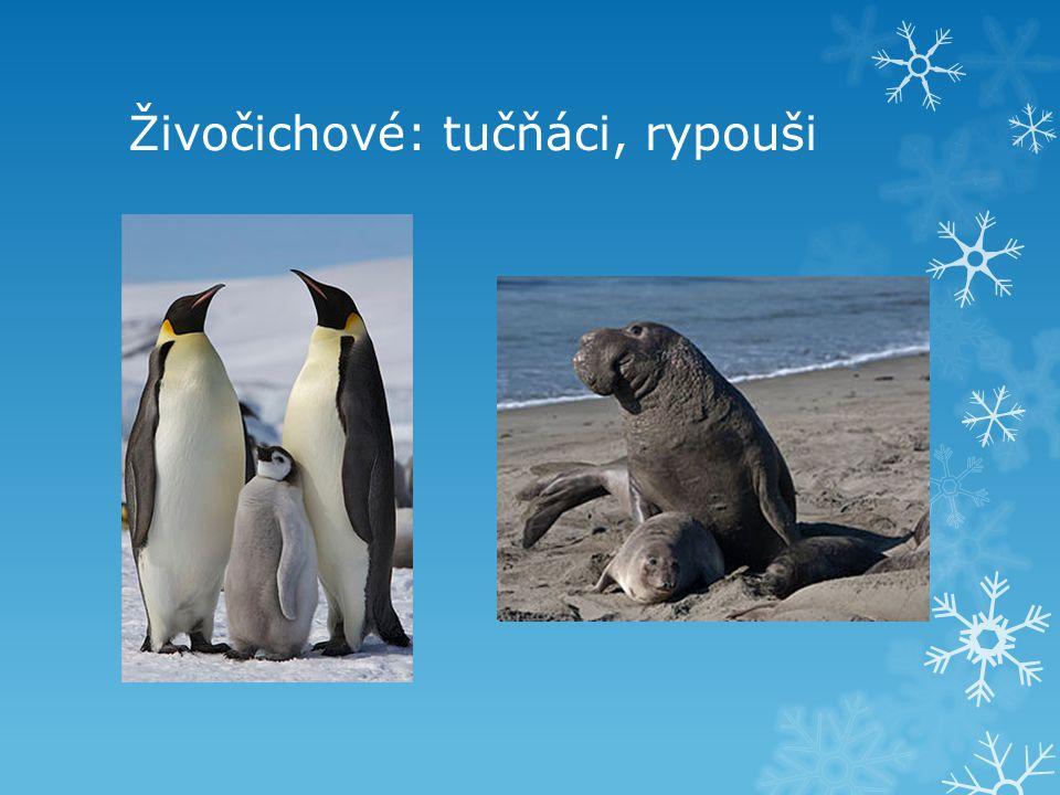 Živočichové: tučňáci, rypouši