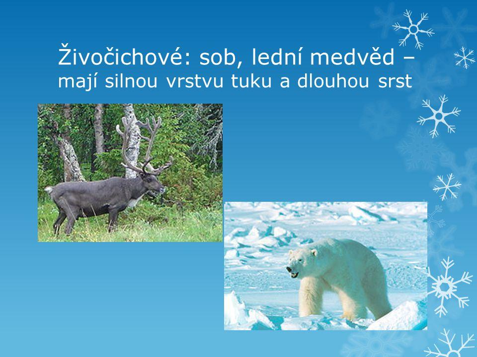 Živočichové: sob, lední medvěd – mají silnou vrstvu tuku a dlouhou srst