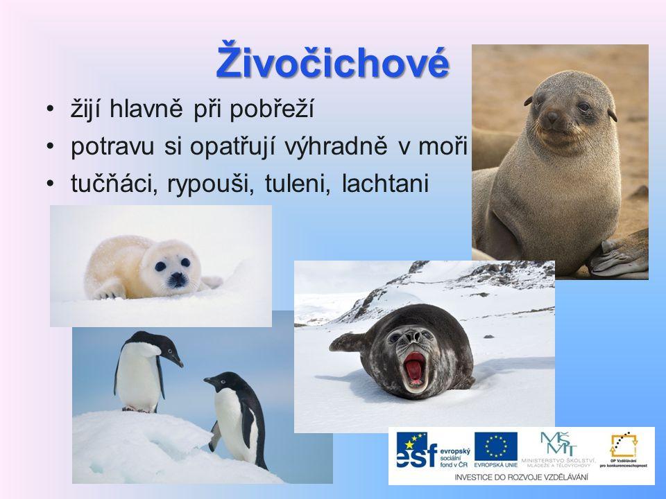 Živočichové žijí hlavně při pobřeží potravu si opatřují výhradně v moři tučňáci, rypouši, tuleni, lachtani