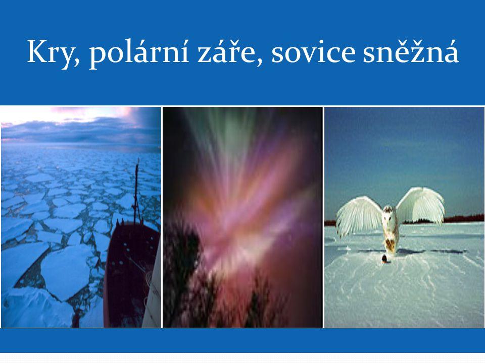 Kry, polární záře, sovice sněžná