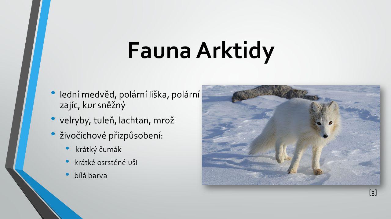 Fauna Arktidy [3][3] lední medvěd, polární liška, polární zajíc, kur sněžný velryby, tuleň, lachtan, mrož živočichové přizpůsobení: krátký čumák krátké osrstěné uši bílá barva