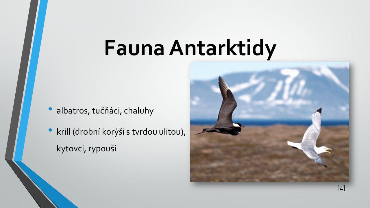 Fauna Antarktidy [4][4] albatros, tučňáci, chaluhy krill (drobní korýši s tvrdou ulitou), kytovci, rypouši