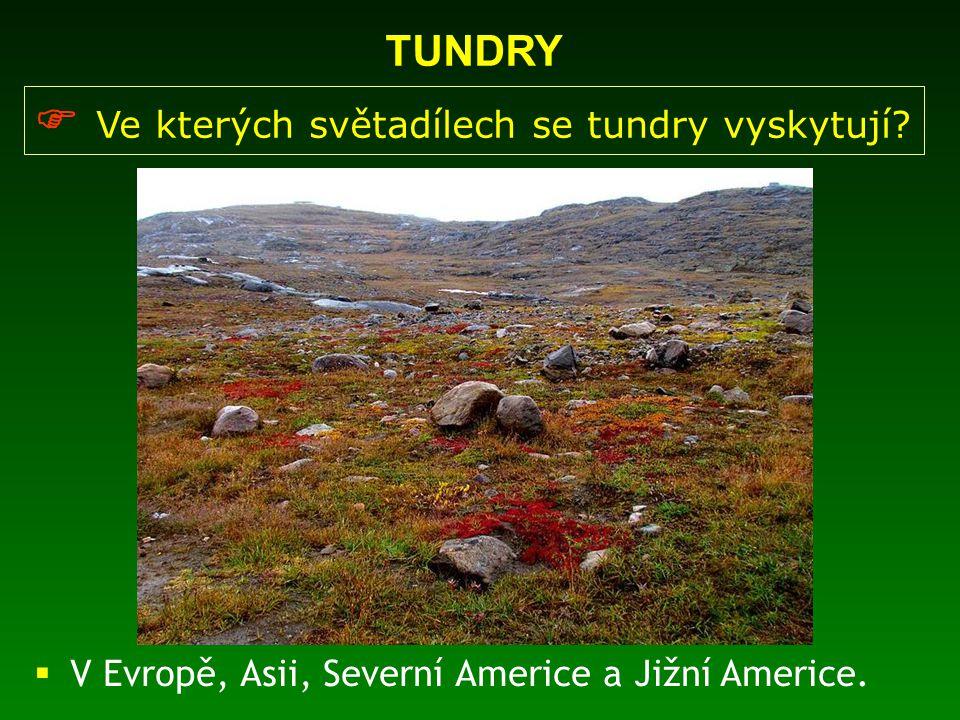 TUNDRY  Ve kterých světadílech se tundry vyskytují?  V Evropě, Asii, Severní Americe a Jižní Americe.