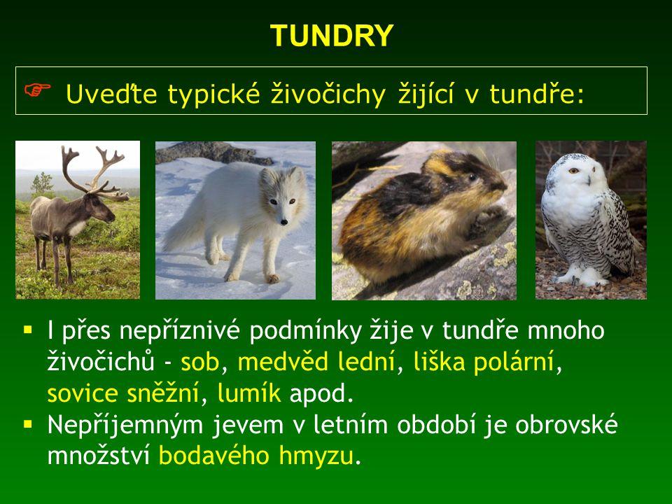 TUNDRY  Uveďte typické živočichy žijící v tundře:  I přes nepříznivé podmínky žije v tundře mnoho živočichů - sob, medvěd lední, liška polární, sovi