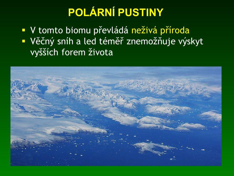 POLÁRNÍ PUSTINY  V tomto biomu převládá neživá příroda  Věčný sníh a led téměř znemožňuje výskyt vyšších forem života