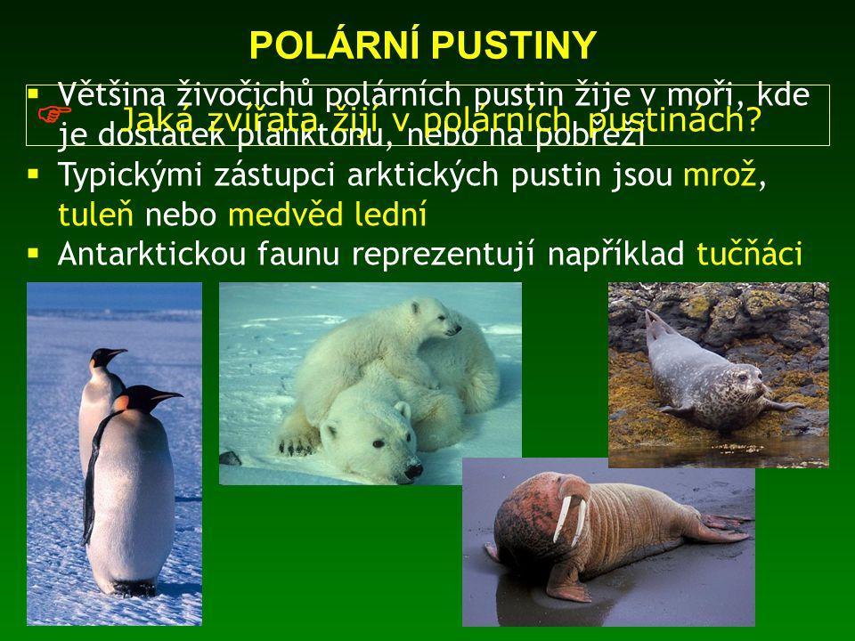  Většina živočichů polárních pustin žije v moři, kde je dostatek planktonu, nebo na pobřeží  Typickými zástupci arktických pustin jsou mrož, tuleň n