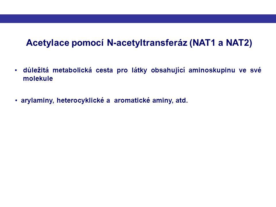 Acetylace pomocí N-acetyltransferáz (NAT1 a NAT2) důležitá metabolická cesta pro látky obsahující aminoskupinu ve své molekule arylaminy, heterocyklic