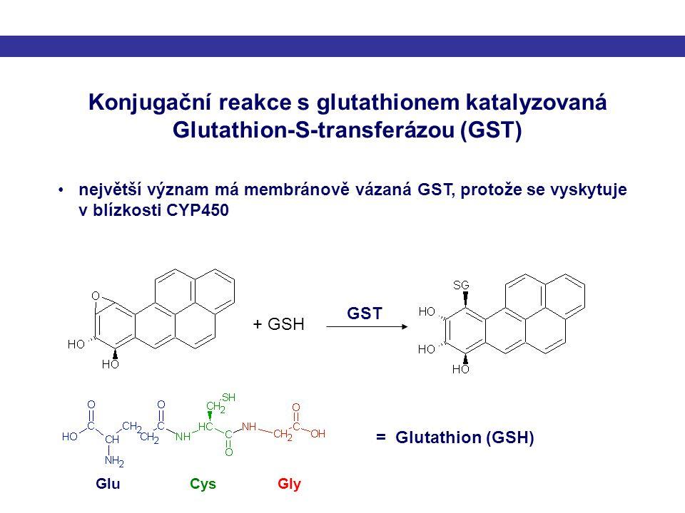 Konjugační reakce s glutathionem katalyzovaná Glutathion-S-transferázou (GST) + GSH GST největší význam má membránově vázaná GST, protože se vyskytuje