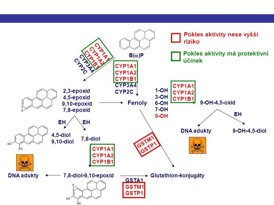 CYP1A1 CYP1A2 CYP1B1 CYP3A4 CYP2C CYP1A1 CYP1A2 CYP1B1 CYP3A4 CYP2C 2,3-epoxid 4,5-epoxid 9,10-epoxid 7,8-epoxid Fenoly 4,5-diol 9,10-diol 7,8-diol CY