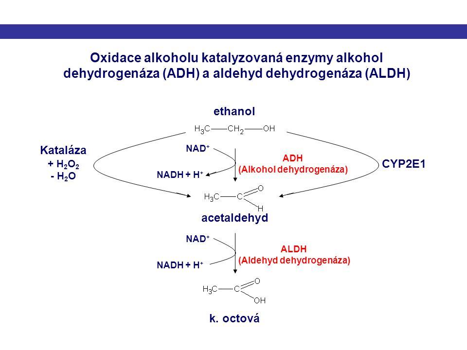ethanol ADH (Alkohol dehydrogenáza) NAD + NADH + H + NAD + NADH + H + ALDH (Aldehyd dehydrogenáza) CYP2E1 Kataláza + H 2 O 2 - H 2 O acetaldehyd k. oc