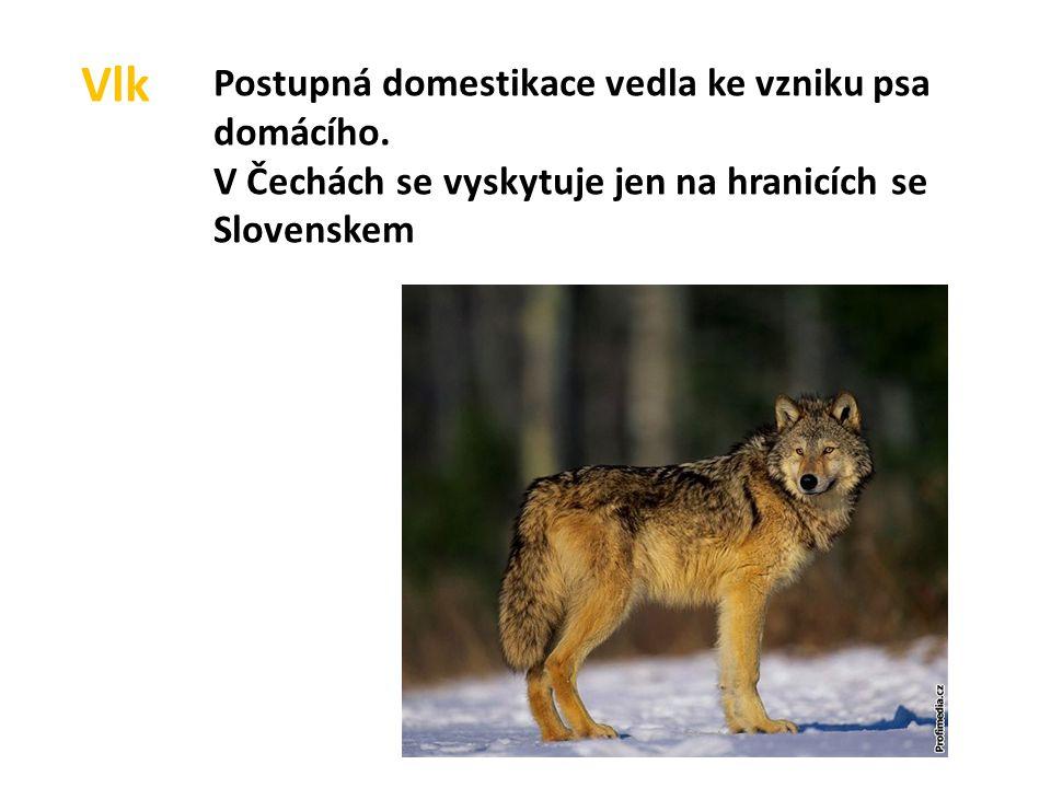 Vlk Postupná domestikace vedla ke vzniku psa domácího. V Čechách se vyskytuje jen na hranicích se Slovenskem