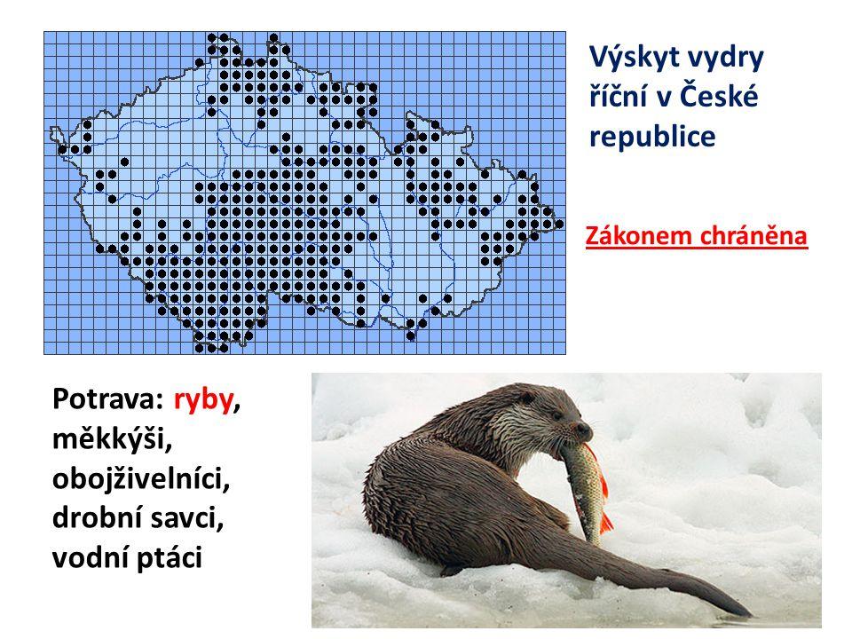 Výskyt vydry říční v České republice Potrava: ryby, měkkýši, obojživelníci, drobní savci, vodní ptáci Zákonem chráněna