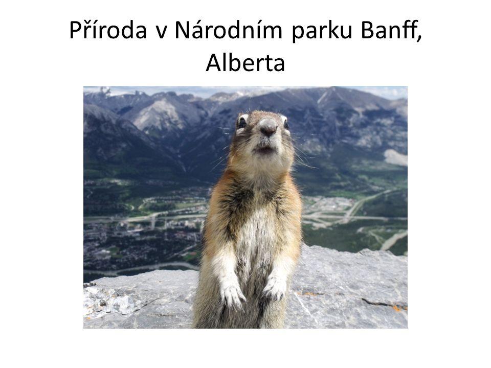 Příroda v Národním parku Banff, Alberta
